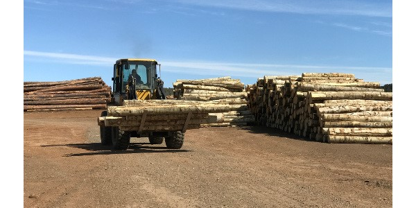 wood prices going up
